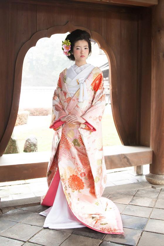 菊花青海紋 ピンク